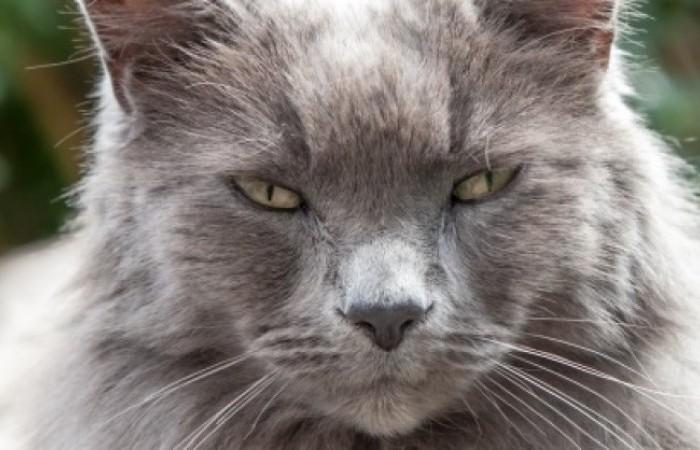 Staroba u mačiek