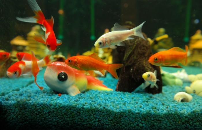 Úvod do akvaristiky