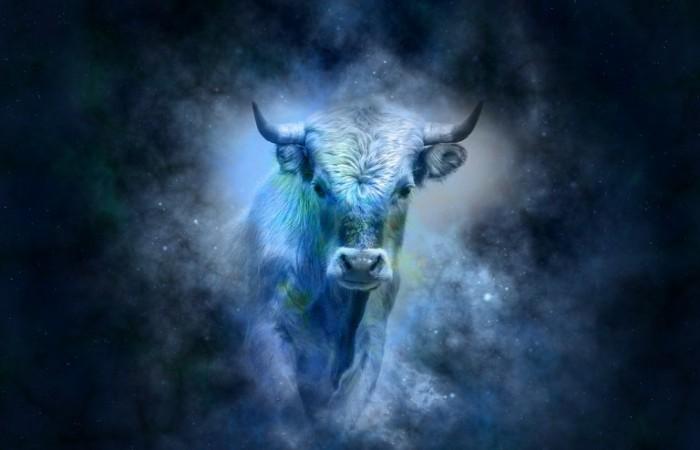 Zvieratko narodené v znamení BÝKA