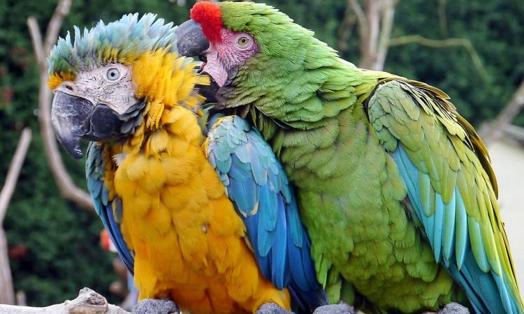 Poruchy správania u papagájov