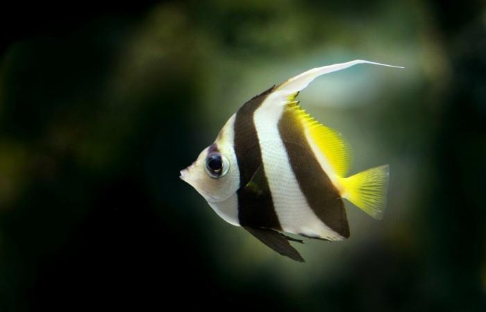 Zmysly rýb