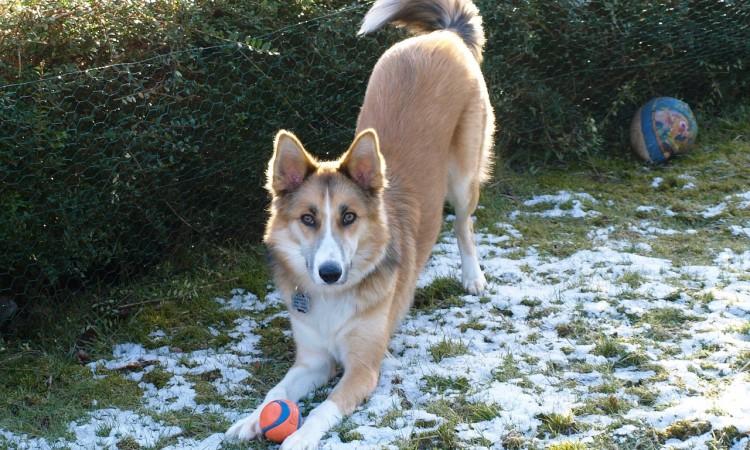 Pes a hra