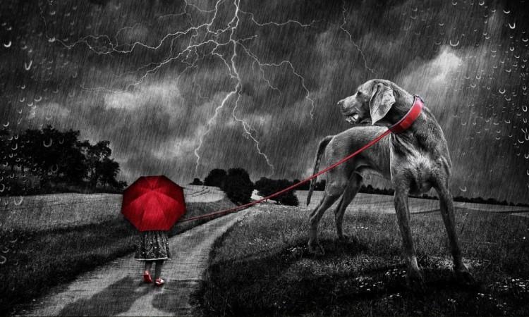 Pes, strach a búrky