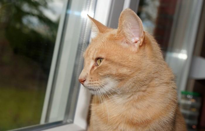 Keď je mačka sama doma