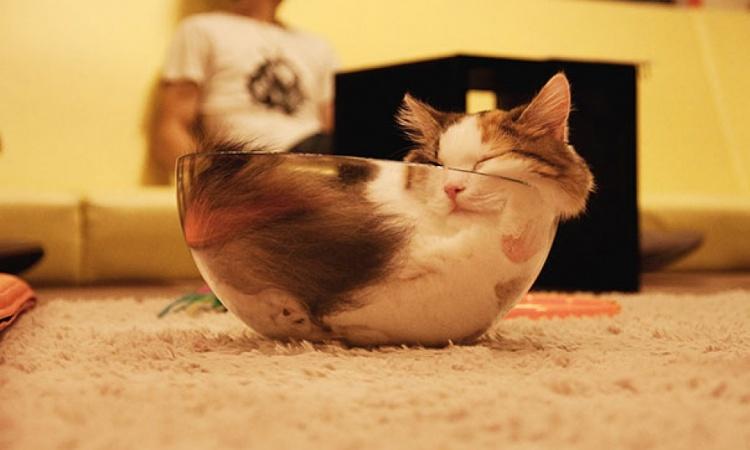 Mačacie spálne