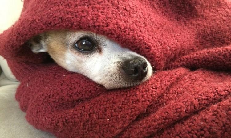 Aké druhy strachu u psov poznáme?
