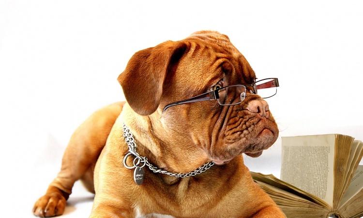 Rozumejú psy ľudskej perspektíve?