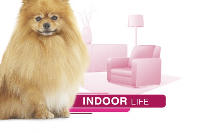 Royal Canin - Indoor Life