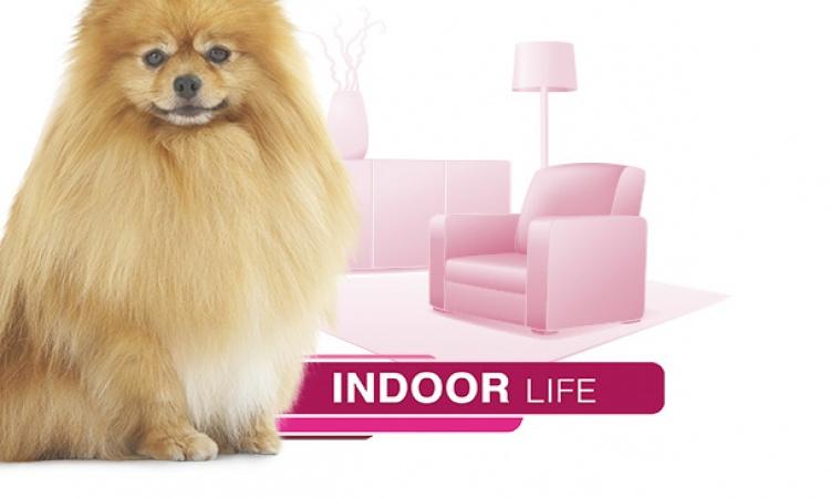 Royal Canin - Indoor Life