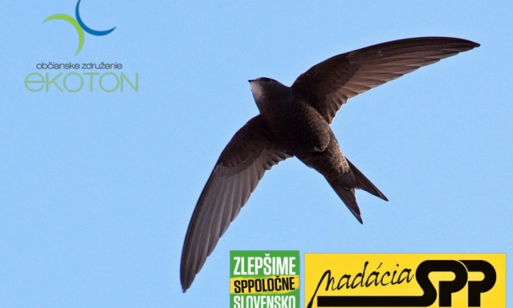 Hlasuj za návrat dážďovníkov a netopierov do Svitu