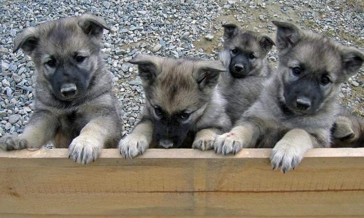 Test na výber šteniatka?