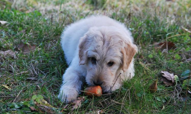 Psy a ľudské jedlo?