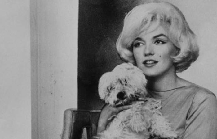 Marilyn Monroe a jej štvornohí miláčikovia