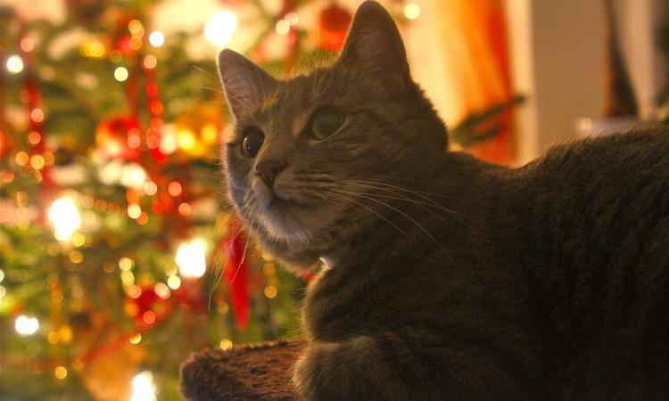 Mačacie vianočné keksíky