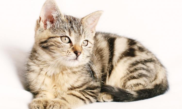 Máme doma mačiatko