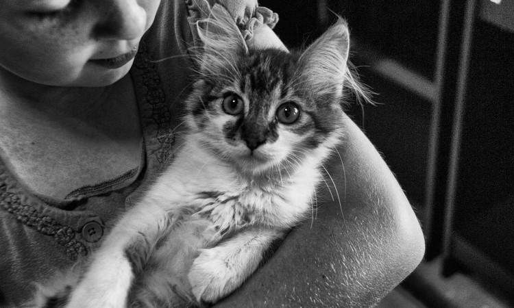 6 najlepších plemien mačiek pre deti