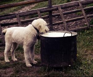 Recepty pre psíkov