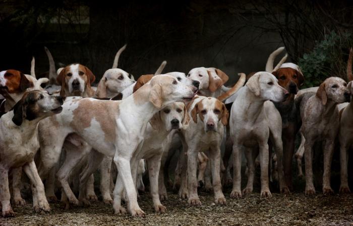 Rozdelenie plemien psov podľa FCI