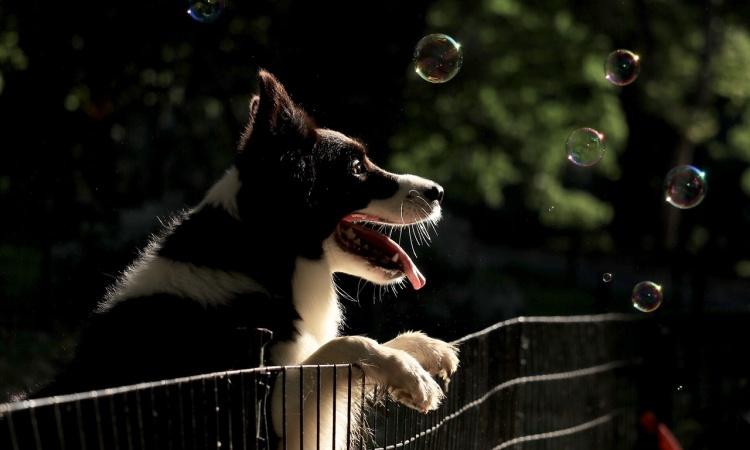 10 zaujímavostí o psoch, ktoré vás prekvapia