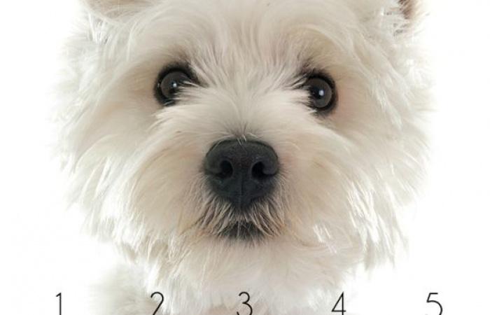 5 Esenciálnych olejov pre psov
