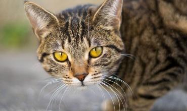 Je mačka pánom svojho majiteľa?